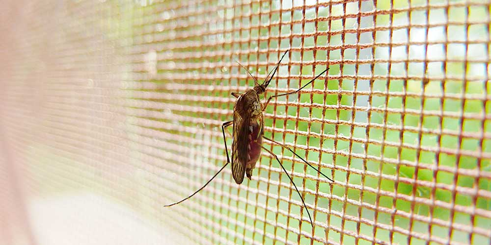 moskitiery na okna